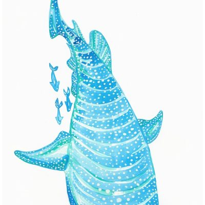 blue-whale-shark