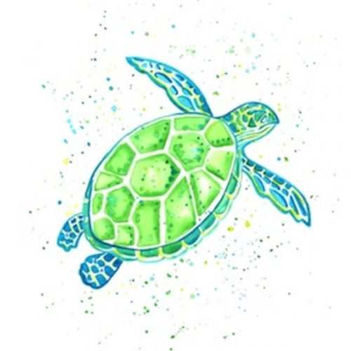 single-green-turtle