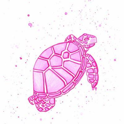 single-pink-turtle