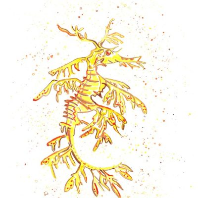 yellow-leafy-sea-dragon