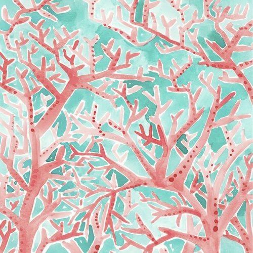 red aqua coral